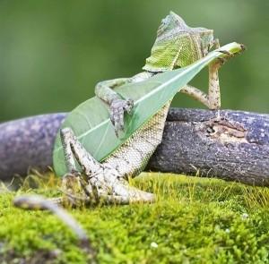 ящерица играет на банджо